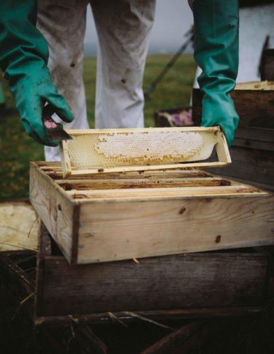 Beekeeper holding a Honey Super Frame