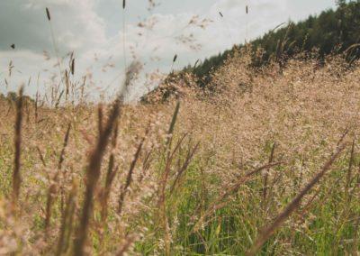 Wild flowers in sunshine