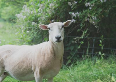 Pretty sheep with flowers