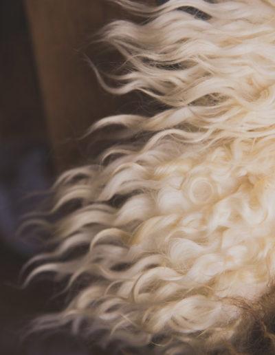 Golden Curly Fleece