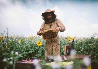 Kaspa with sunflowers and hives