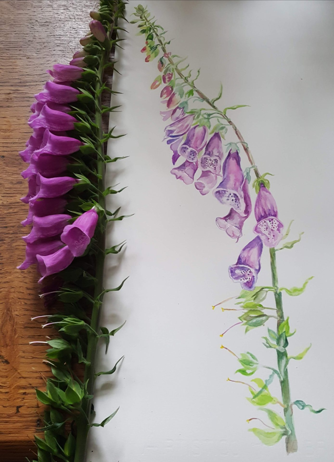Painting of a fox glove
