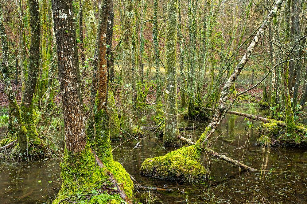 Abbotsmarsh Woodland